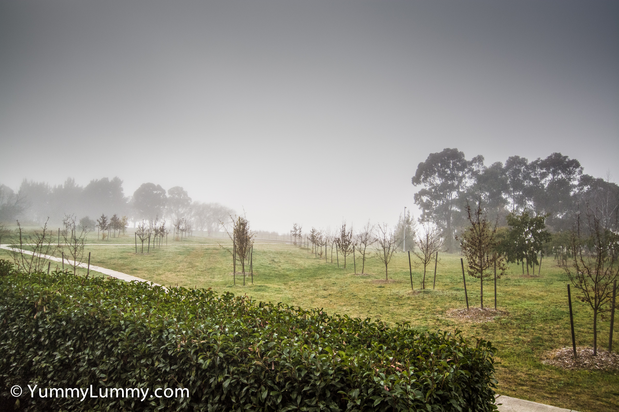 A photograph of fog over Lake Ginninderra