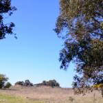 Lake Ginninderra grassland