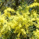 Flowers on Lake Ginninderra