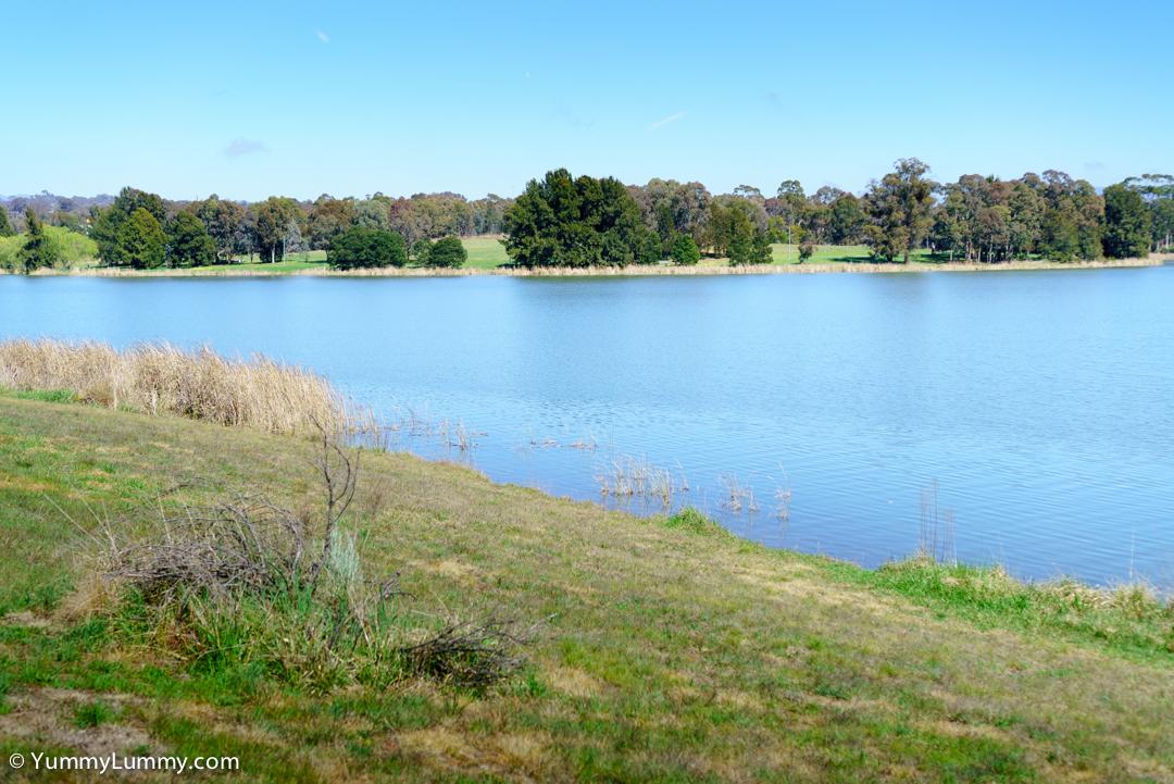 Lake Ginninderra grassy bank