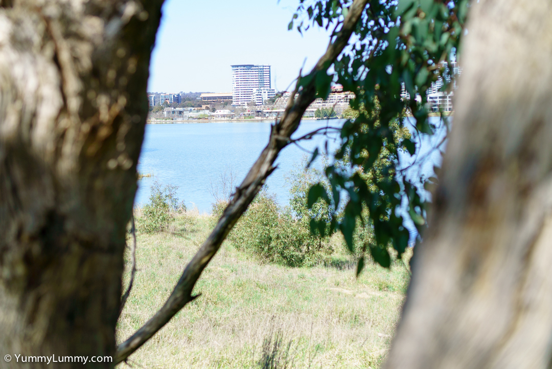 Lake Ginninderra. Trying to practise framing!