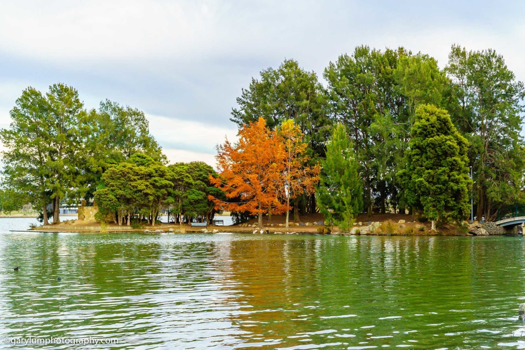 Lake Ginninderra trees