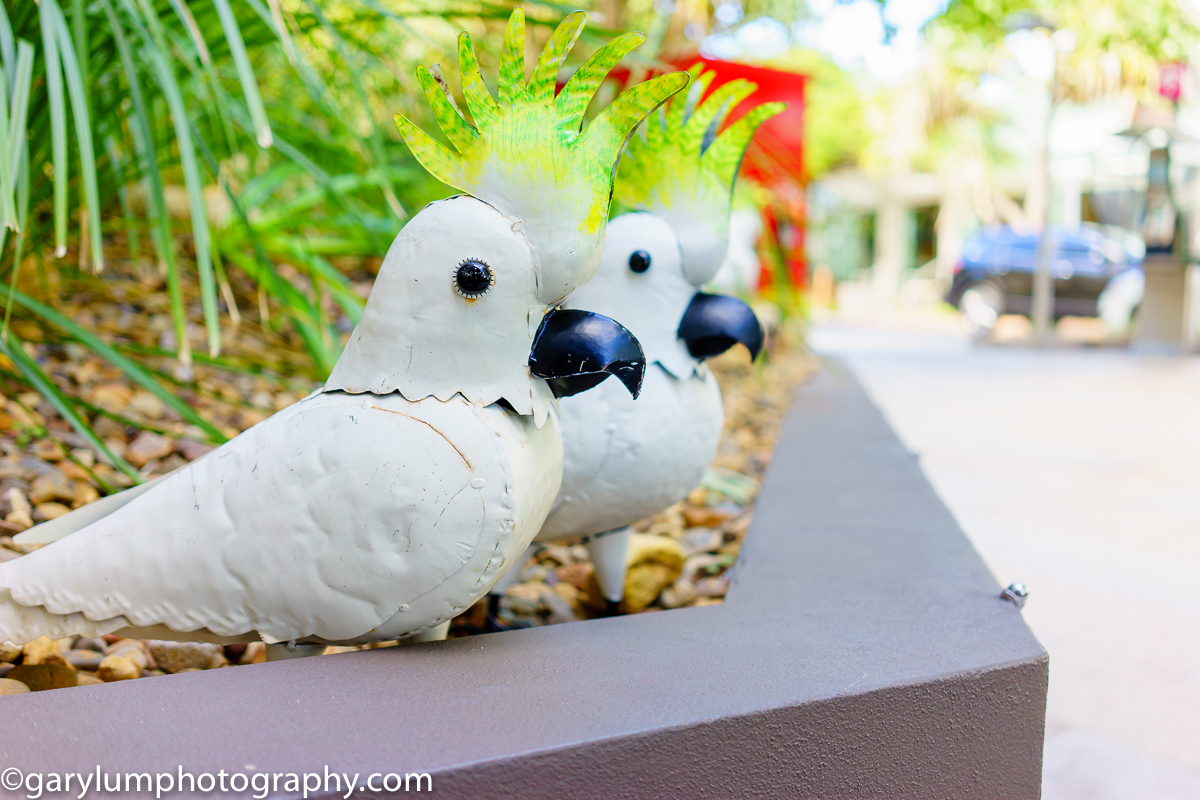 Cockatoos by two