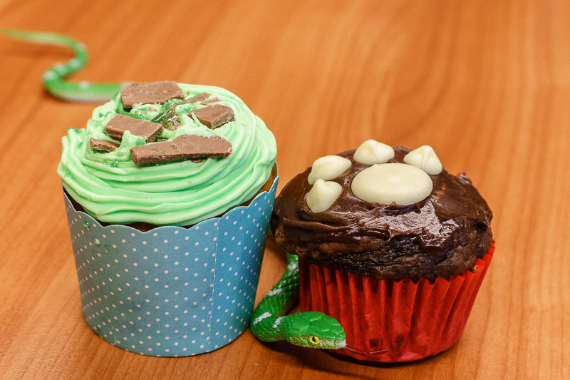 RSPCA cupcakes Monday 24 August 2015.
