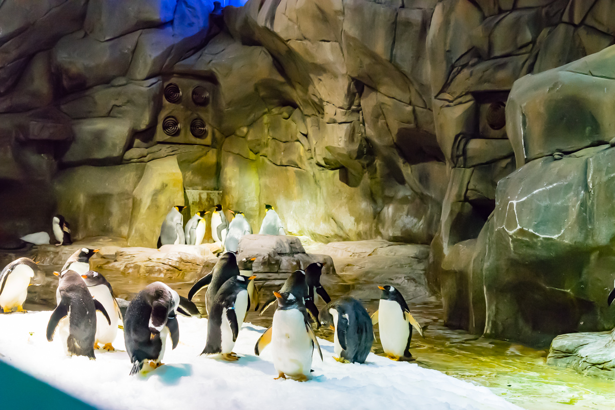 A photograph of Penguins in the Antarctic exhibit