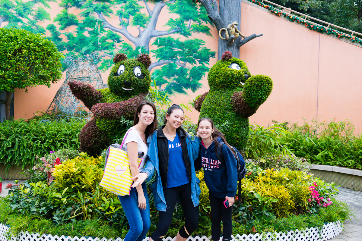 Miss14, Ms18 and Ms20 with tree giant pandas