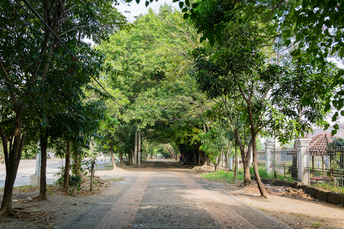 Gary Lum Boulevard of trees Manila