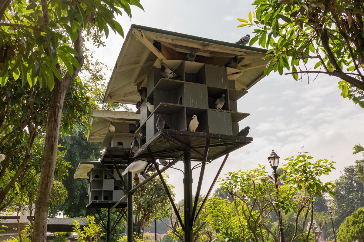 Gary Lum Fort Santiago pigeons