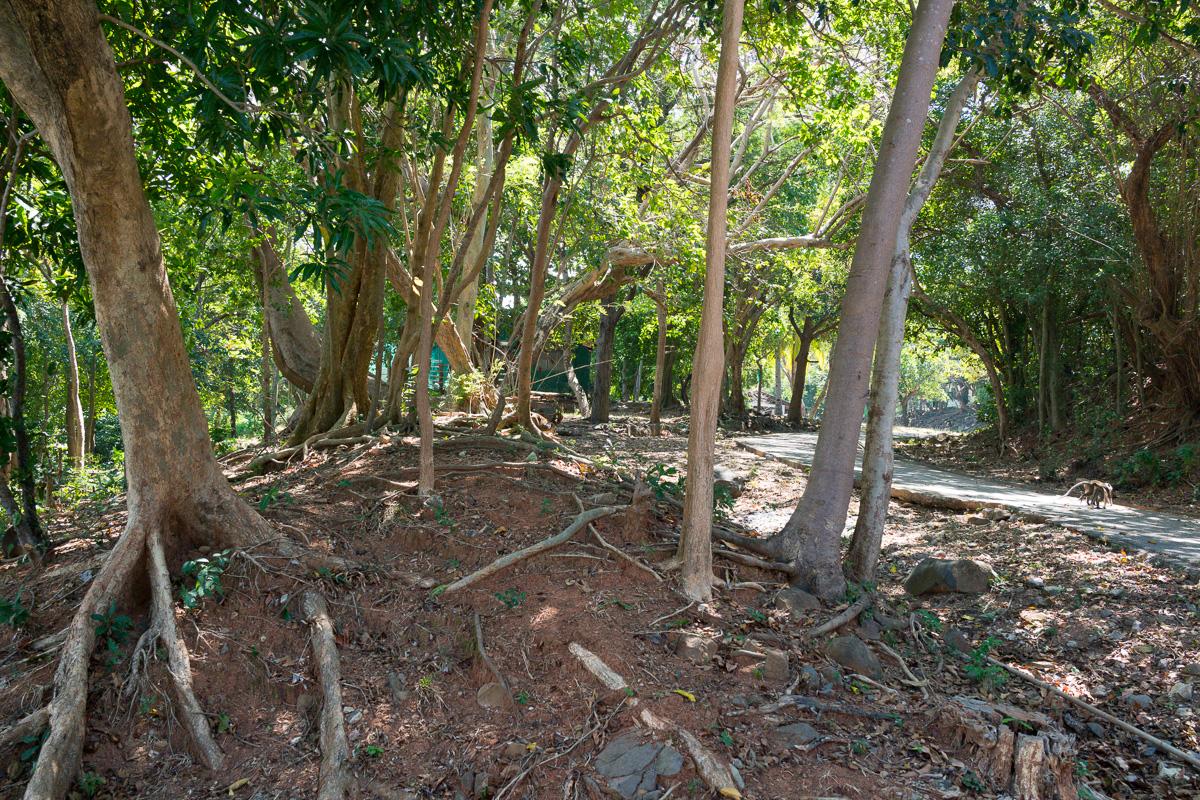 Can you see the monkeys here on Corregidor Island