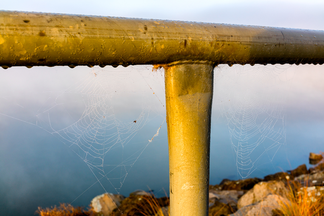 Spider web on a guard rail on Lake Ginninderra on a foggy misty Saturday morning